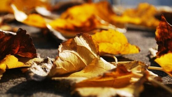 7 English Idioms for the Autumn Season